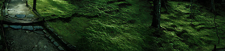 Jon Scott Anderson: Temple moss (2004)