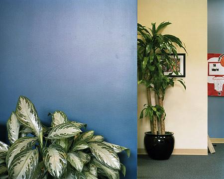 Gideon Barnett: Flora