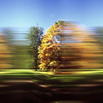 Rob Carter: Westonbirt Arboretum III