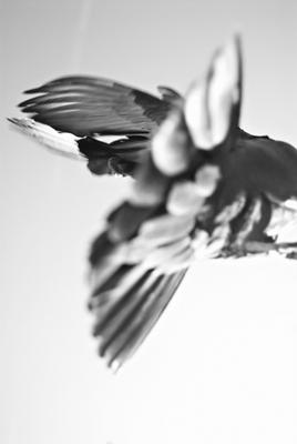 Christiane Feser: Tauben 5