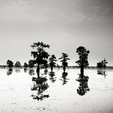 Josef Hoflehner: Cypress Swamp 5