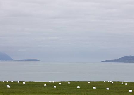 Per Bak Jensen: Grass Field