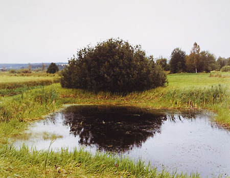 Anna Shteynshleyger: Perm (Bush) (2001)