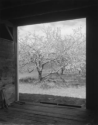 John Szarkowski: Winesap from Barn (1997)